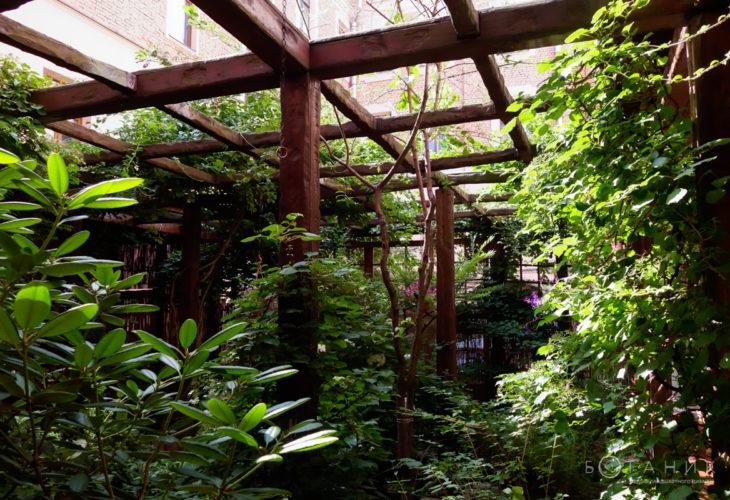 Garden Cafe фото 5
